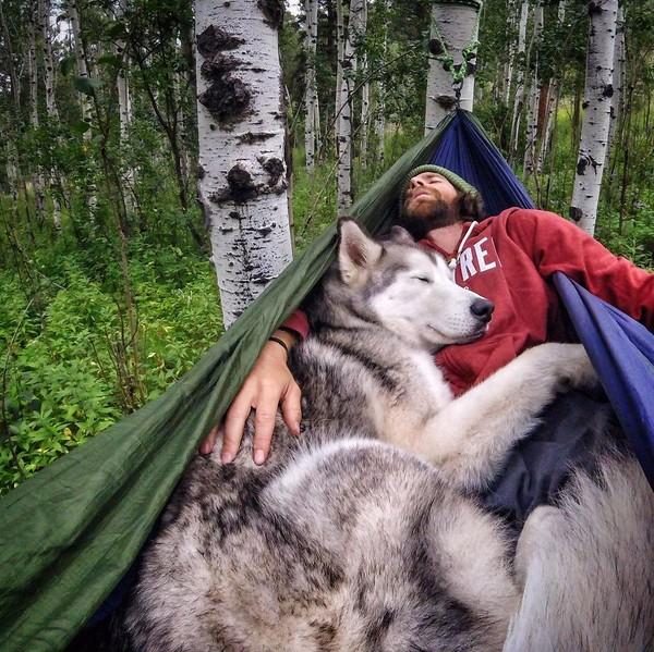 Ảnh siêu dễ thương về chú sói lai cùng chủ đi du lịch khắp thế giới 1