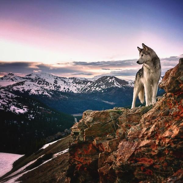 Ảnh siêu dễ thương về chú sói lai cùng chủ đi du lịch khắp thế giới 7