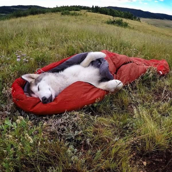 Ảnh siêu dễ thương về chú sói lai cùng chủ đi du lịch khắp thế giới 20