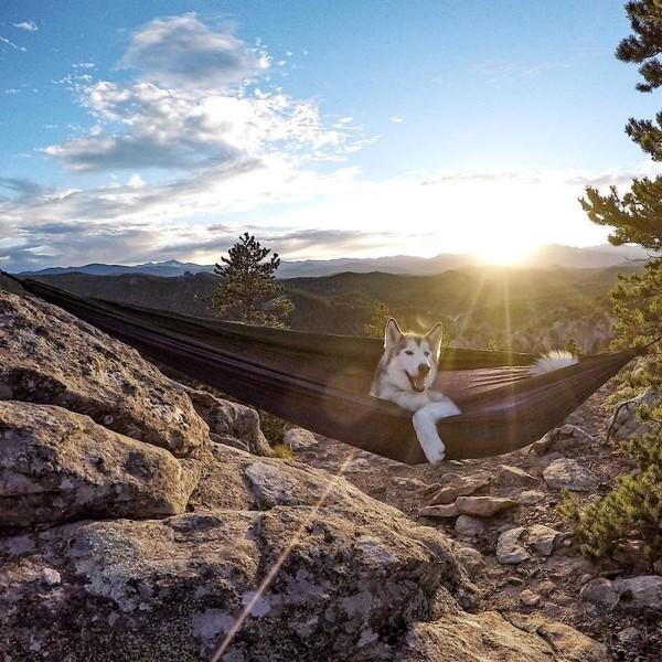 Ảnh siêu dễ thương về chú sói lai cùng chủ đi du lịch khắp thế giới 8
