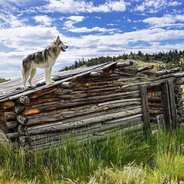 Ảnh siêu dễ thương về chú sói lai cùng chủ đi du lịch khắp thế giới 9