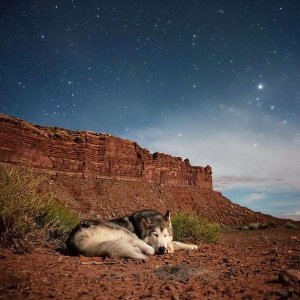 Ảnh siêu dễ thương về chú sói lai cùng chủ đi du lịch khắp thế giới 11