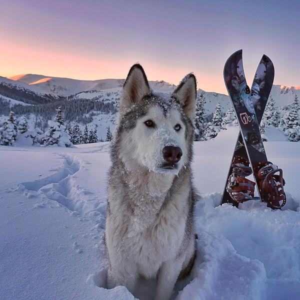 Ảnh siêu dễ thương về chú sói lai cùng chủ đi du lịch khắp thế giới 13