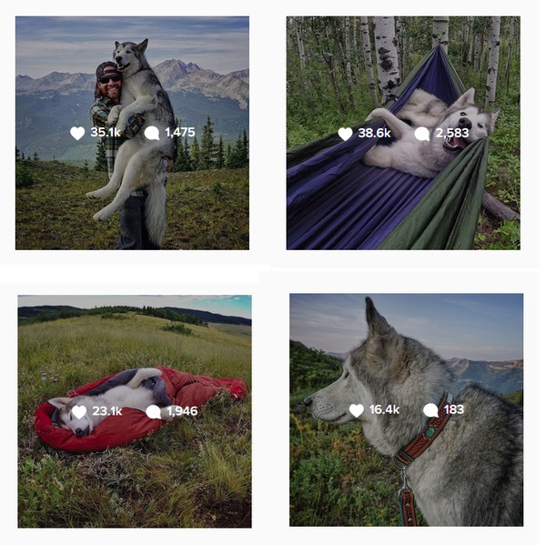 Ảnh siêu dễ thương về chú sói lai cùng chủ đi du lịch khắp thế giới 2