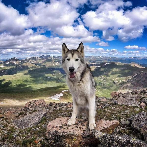 Ảnh siêu dễ thương về chú sói lai cùng chủ đi du lịch khắp thế giới 15