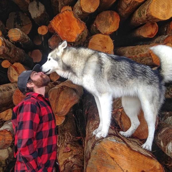 Ảnh siêu dễ thương về chú sói lai cùng chủ đi du lịch khắp thế giới 17