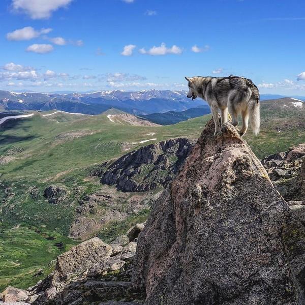 Ảnh siêu dễ thương về chú sói lai cùng chủ đi du lịch khắp thế giới 4