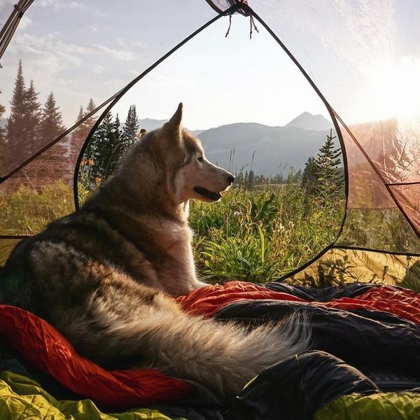 Ảnh siêu dễ thương về chú sói lai cùng chủ đi du lịch khắp thế giới 5